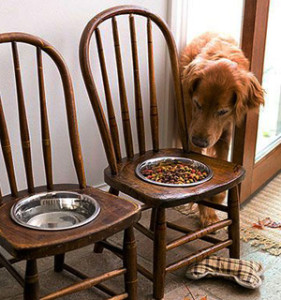 Old-Wooden-Chairs-Dog-Bowls-and-Water-Station