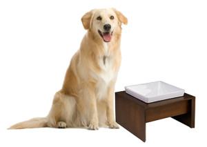 Elevated Dog Feeding Stand with Single Bowls