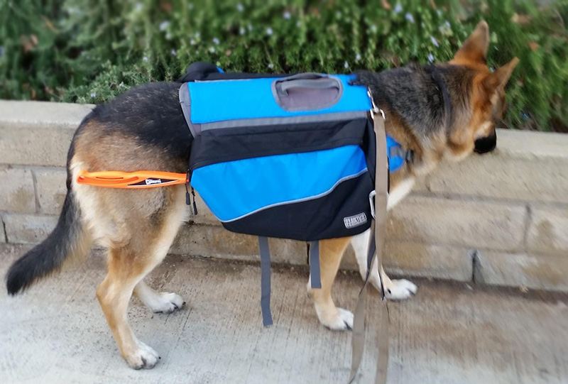 Dog-BackPack