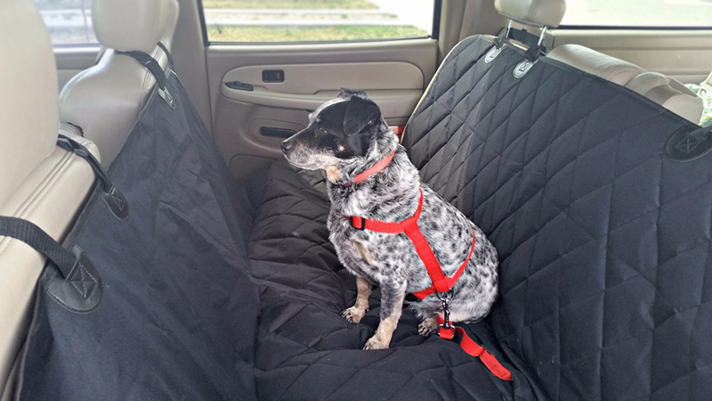 Rear-Dog-Car-Seat-Cover-with-Seat-Anchors