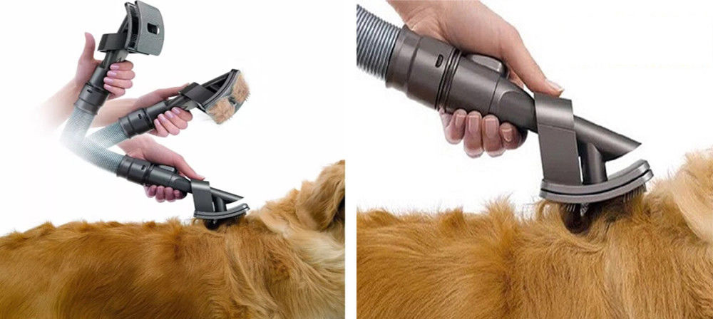 vacuum your dogs