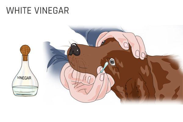 remove dog tear stain with white vinegar