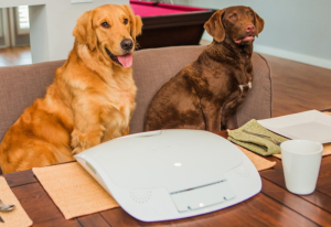 Feed and Go Automatic Pet Feeder with Built-In webcam and Wifi